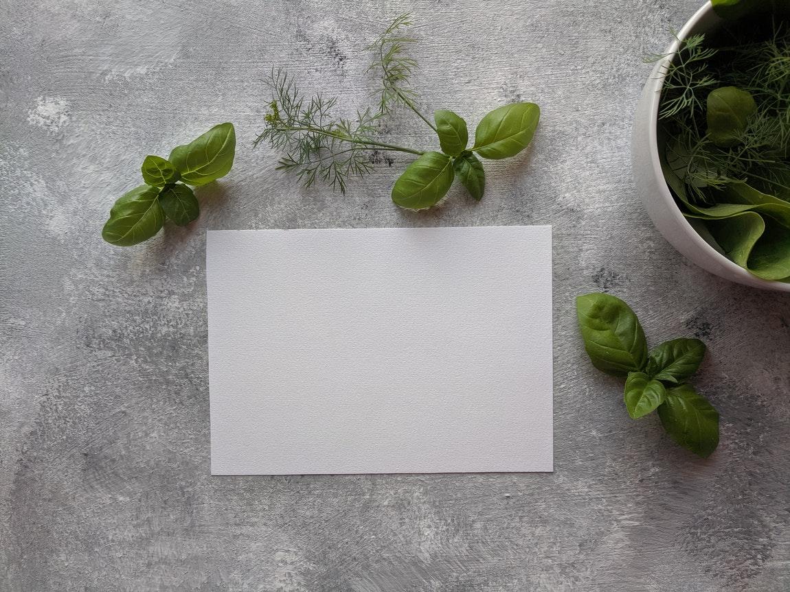 The Basics Of Growing A Herb Garden