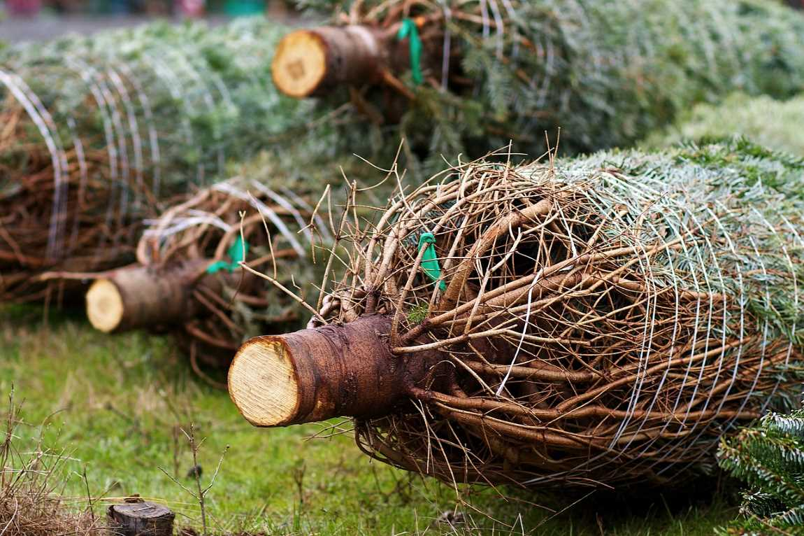 Benefits Of Working With A Tree Relocation Service